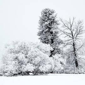 Mike  Dawson - Winter White