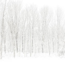 Winter White Out by Karol Livote