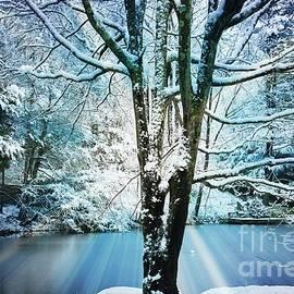Winter Wonderland by Judy Palkimas