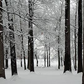 Winter Woods by Andrea Kappler