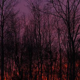 Winter Woods Sunset by Karol Livote