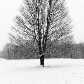 Rick Berk - Winterclove