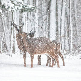 Winters Love by Karol Livote