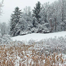 Aimee L Maher Photography and Art Visit ALMGallerydotcom - Winterscape