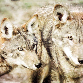 Athena Mckinzie - Wolf Pair