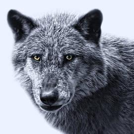 Joachim G Pinkawa - wolfman II