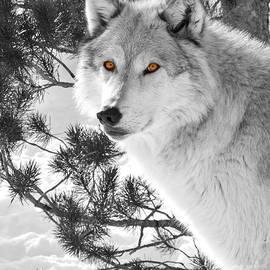 Lloyd Alexander - Wolf