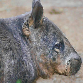 Wombat Profile by Photographic Art by Russel Ray Photos