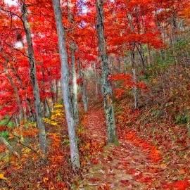 Lynn Bauer - Wonders of Autumn