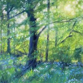 Woodland Sunset by Bonnie Mason