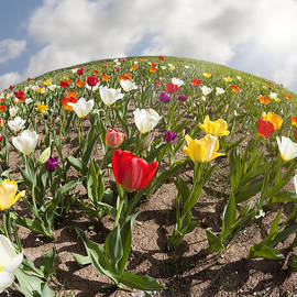 World of Tulips by Alexey Stiop