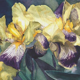 Greta Corens - Watercolor of a Tall Bearded Iris painted in yellow with purple veins
