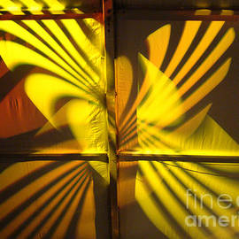 Eva Kato - Yellow Butterfly