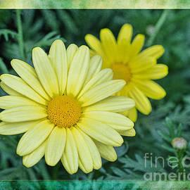 Terry Weaver - Yellow Daisy PhotoArt