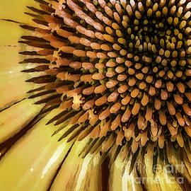 Deena Athans - Yellow Echinacea