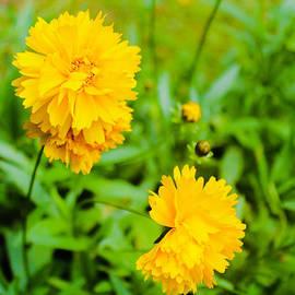 Julien Boutin - Yellow Flowers