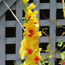 Sonali Gangane - Yellow Grandeur