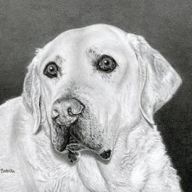 Yellow Labrador Retriever- Bentley by Sarah Batalka