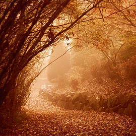 Monte Arnold - Yellow Leaf Road