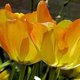 Yellow by Ralph Jones