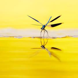 Roeselien Raimond - Yellow River