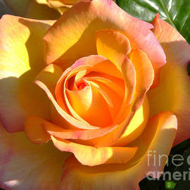 Yellow Rose Bud by Debby Pueschel