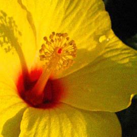 ARTography by Pamela Smale Williams - Yellow Satellite Stamen Joy