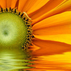 Don Johnson - Yellow Sunflower Sunrise