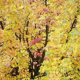 Baslee Troutman - Yellow Trees Art Prints Autumn Leaves
