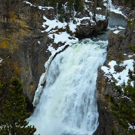 Michele Myers - Yellowstone Upper Falls in Spring