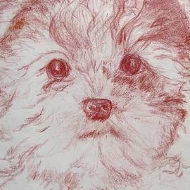 Yorkie Pup Sketch by Melinda Saminski
