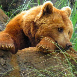 Young Grizzly Napping by Dean Wittle