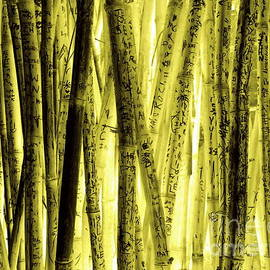 Joe Jake Pratt - Zoo Bamboo