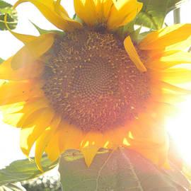 Sun Flower by Nada Meeks