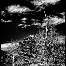 Bare Trees at Red Rocks by David Patterson