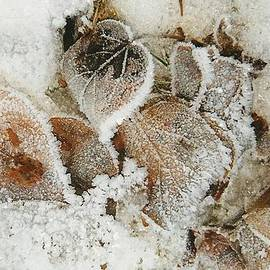 Shirley Sirois - Edged in Frost
