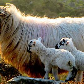 Family by Barbara Walsh