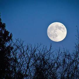 Jiayin Ma - Moon Night