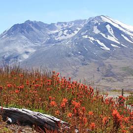 Mt St Helens by Samantha Panzera