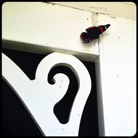 Phoenician Butterfly