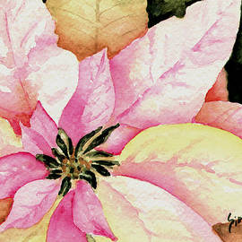 Sam Sidders - Poinsettia