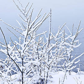 Blue and white winter by Elena Elisseeva