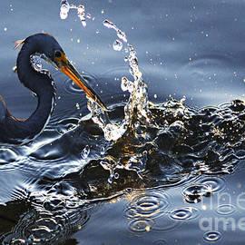 Splash by Bob Christopher