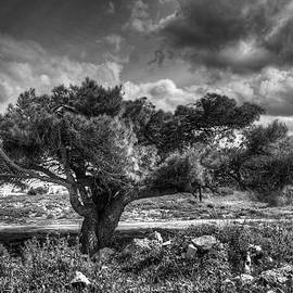 Stavros Argyropoulos - Tree in the wind