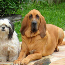 Lucky and Cujo by Val Oconnor