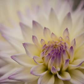 A Beautiful Softness by Mike Reid