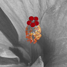 James Granberry - A Dash Of Color Hibiscus