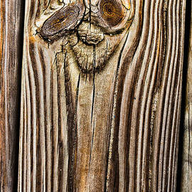 A Plank Face by Christopher Holmes