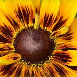 A Pocket Full Of Sunshine... by Tanya Tanski