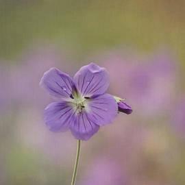 Kim Hojnacki - A Purple Moment